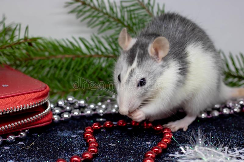 Christmas rat Symbol of the new year 2020. Year of the rat. Chinese New Year 2020. Christmas toys, bokeh. Rat on the background of stock image