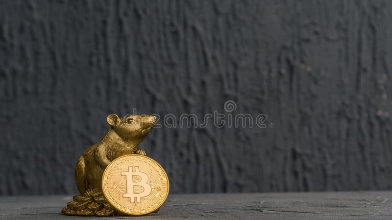Christmas rat Symbol of the new year 2020 with Golden Bitcoins royalty free stock photography