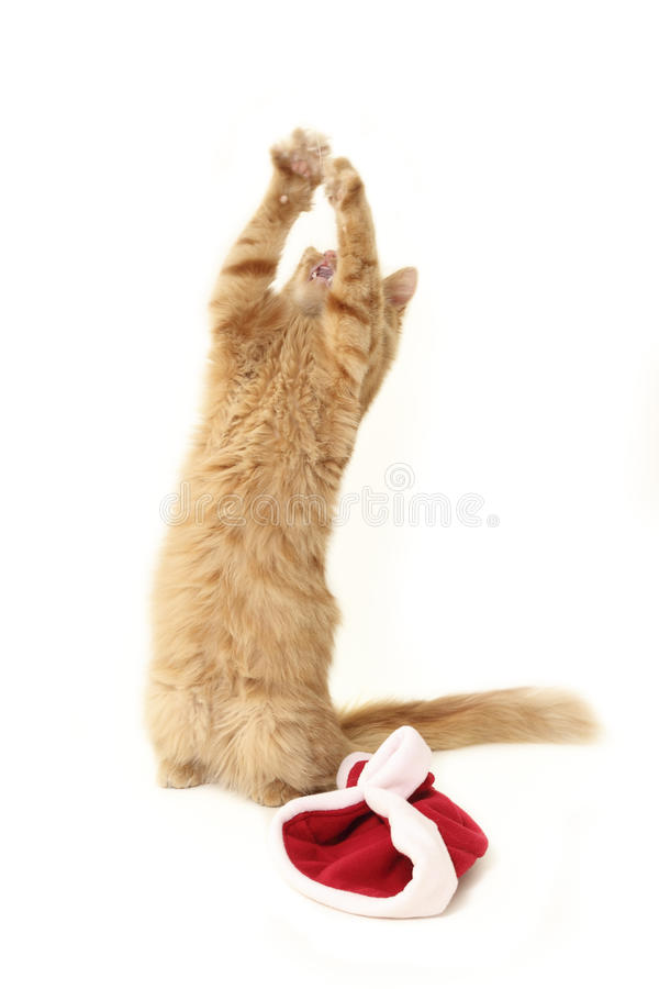 Christmas red cat. Praying isolated on white background stock image