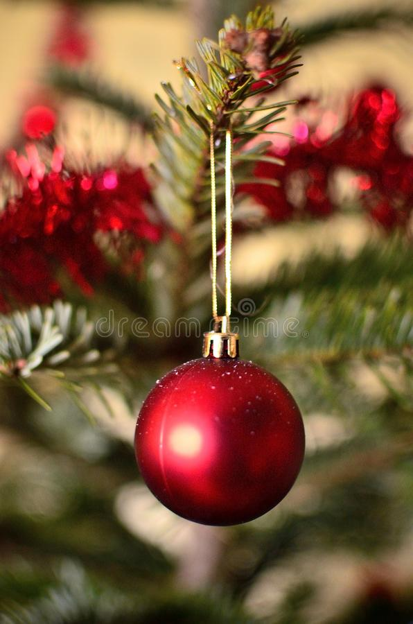 One Christmas Red Globe with Christmas Tree on the Background stock image