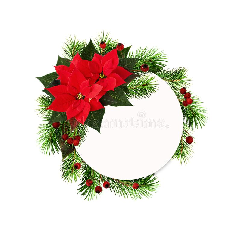 Christmas round frame with red poinsettia flowers, pine twigs an stock photo