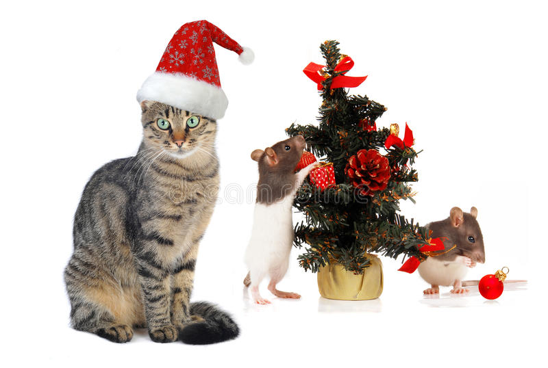 Christmas Santa cat and rat. On a white background stock images