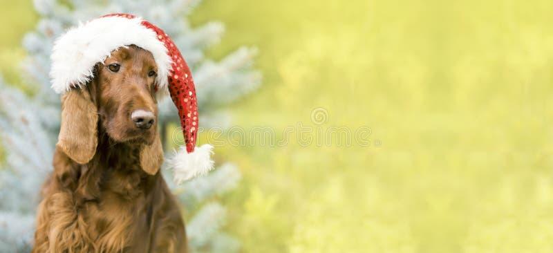 Christmas Santa Claus dog banner, greeting card idea. Cute Christmas dog with Santa Claus hat - web banner or greeting card idea stock photography