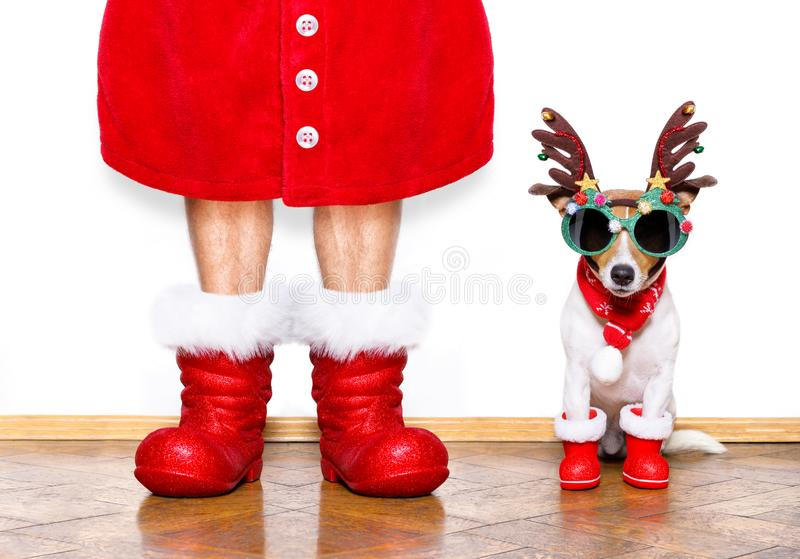 Christmas santa claus dog. Christmas santa claus jack russell dog isolated on white background with reindeer hat and red boots for the holidays waiting and royalty free stock images