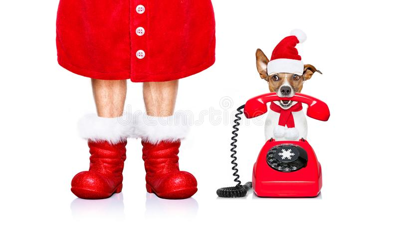 Christmas santa claus dog on the phone. Funny christmas santa claus telephone call or operator dog isolated on white background with red boots for the holidays royalty free stock image