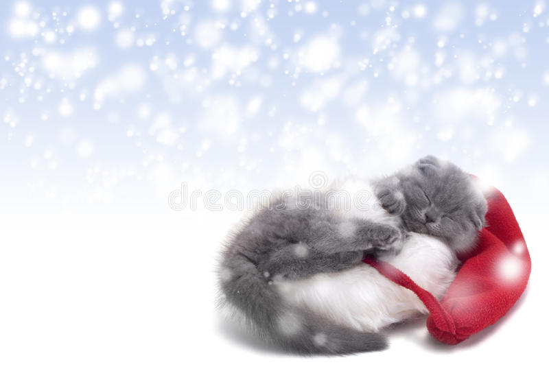Christmas scottish fold kitty. Laying in Santa hat with snow background stock image