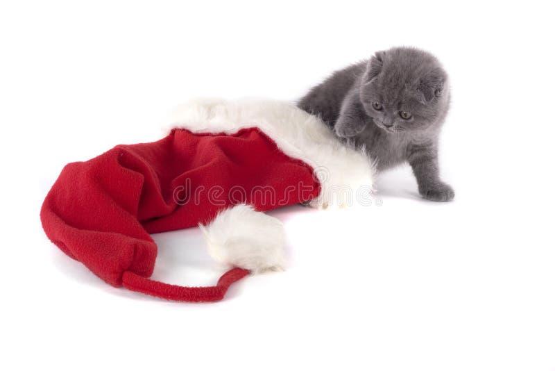 Christmas scottish fold kitty. And Santa's hat royalty free stock photography