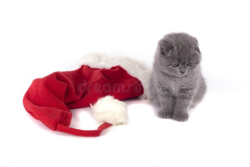 Christmas scottish fold kitty. And Santa's hat royalty free stock photos