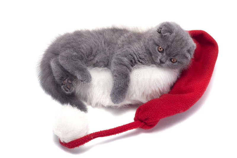 Christmas scottish fold kitty. Laying in Santa hat royalty free stock photography
