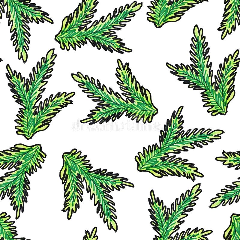 Christmas seamless pattern hand-drawn. Green branch of the Christmas tree on a white background royalty free illustration