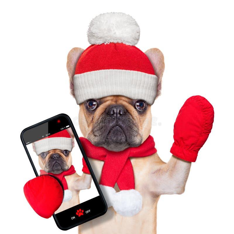 Christmas selfie dog stock photos