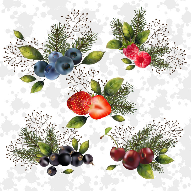 Christmas set of berries. Christmas set of berries and spruce branches for your decor royalty free illustration