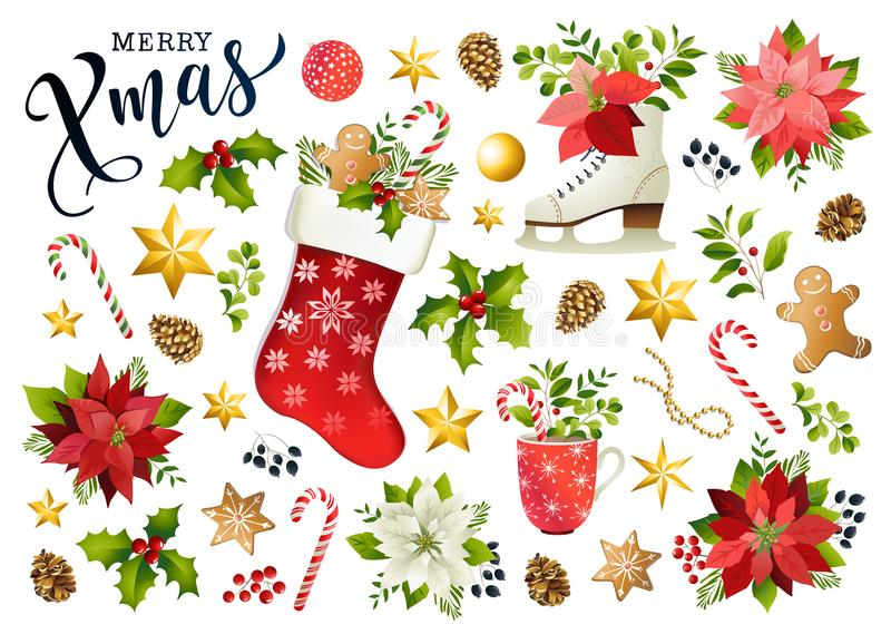 Christmas set design composition of poinsettia, fir branches, cones, holly and other plants. Cover, invitation, banner, greeting c. Christmas set design vector illustration