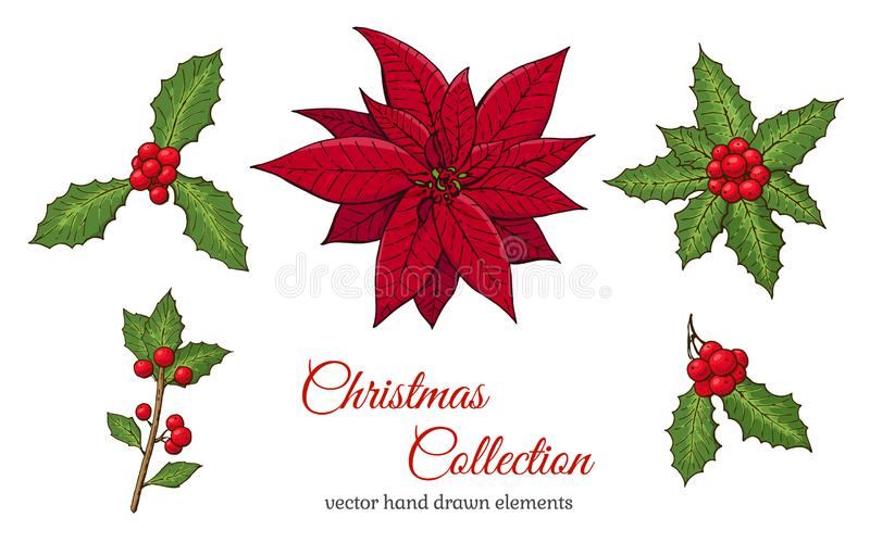 Christmas set with hand drawn plants. Holly plant with red berry and green leaves and Mistletoe. Seasonal winter symbols. Isolated. Elements on white background royalty free illustration