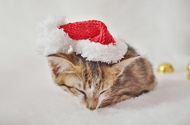 Christmas sleeping kitty. With a white background, and gold jingle bells royalty free stock images