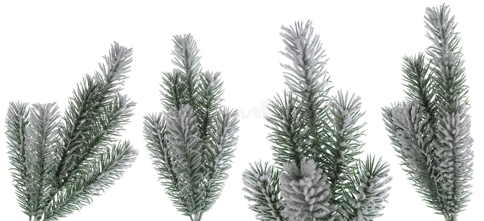 Christmas snow fir tree branch set as part of  winter design isolated on white background stock image
