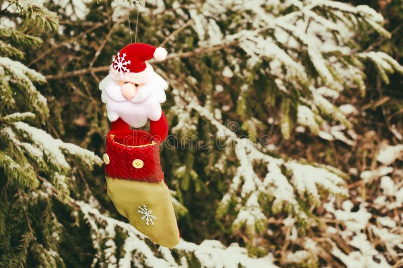 Christmas sock on the tree against the background of snow, all real. toy and santa stocking hanging on a branch covered with snow stock photo
