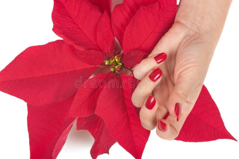 Christmas Spa royalty-vrije stock foto's