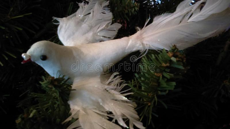 Christmas spirit of the dove royalty free stock images