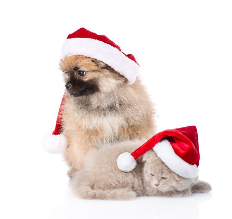 Christmas spitz puppy and scottish kitten in santa hats looking away. On white stock photos