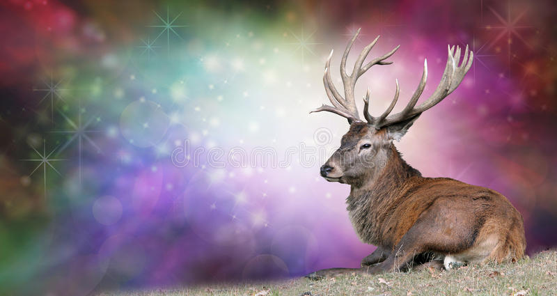 Christmas Stag on a festive background stock images