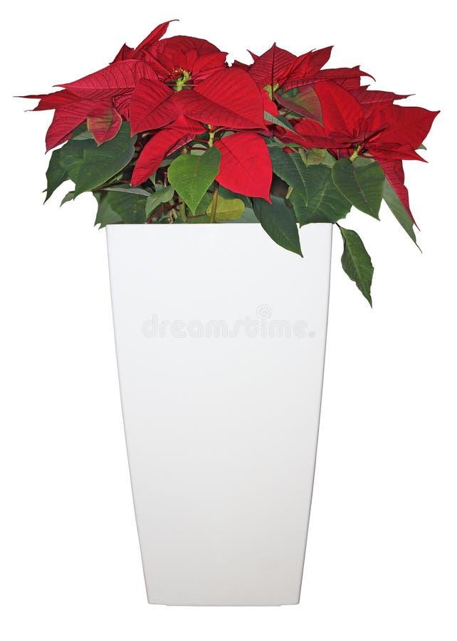 Free Christmas Star Stock Photos - 28131043