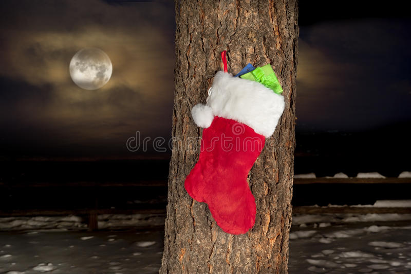 Christmas stocking on pine tree stock photography