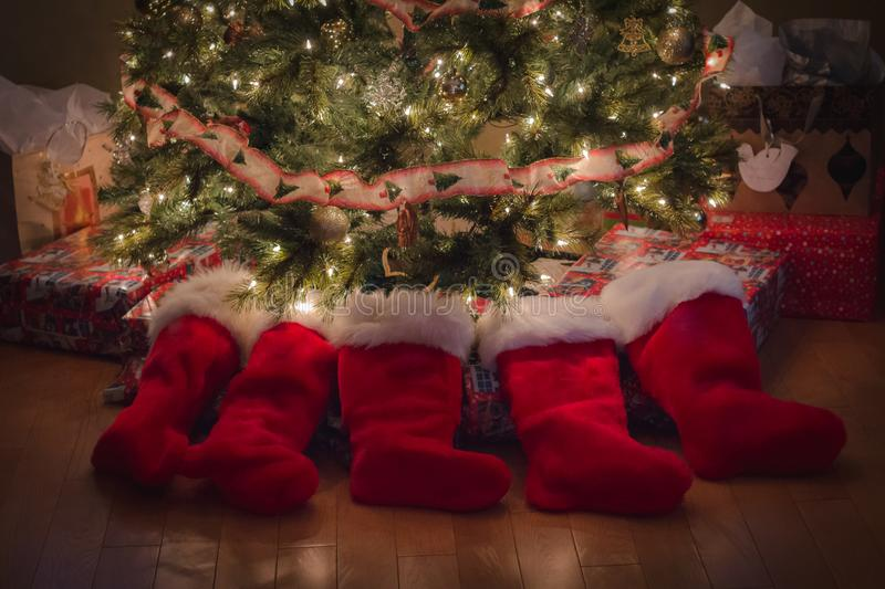 Christmas stockings around the tree. Five red Christmas stockings lay around the Christmas tree waiting in anticipation and excitement for the children to find stock image