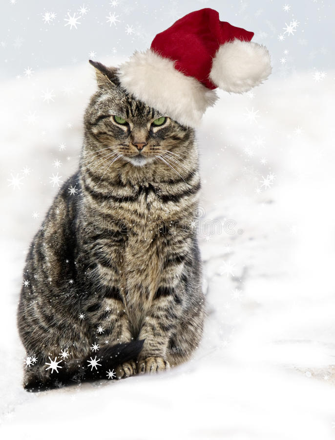 Download Christmas Tabby Cat Stock Photos - Image: 28083293