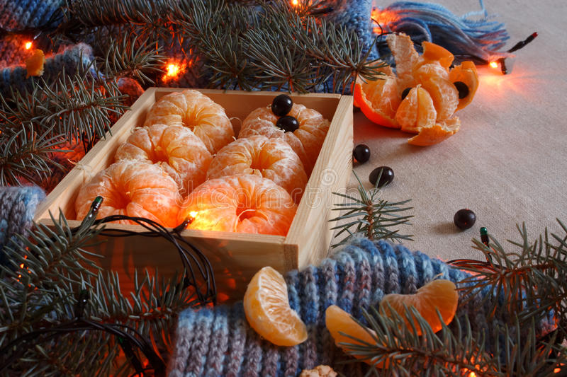 Christmas tangerines in a cosy knitted scarf with grey background. Christmas tangerines in a cosy knitted scarf with a gray background, with garland and sprigs royalty free stock image
