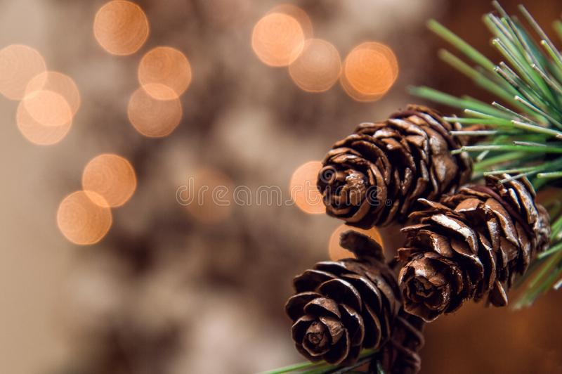Close up. Spruce branch with small fir cones. Blurry lights of garland on the background. stock photo