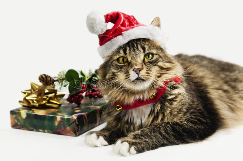 Christmas Time Kitty is Santa's Helper. Beautiful Christmas time kitty is ready to help Santa deliver his presents royalty free stock images