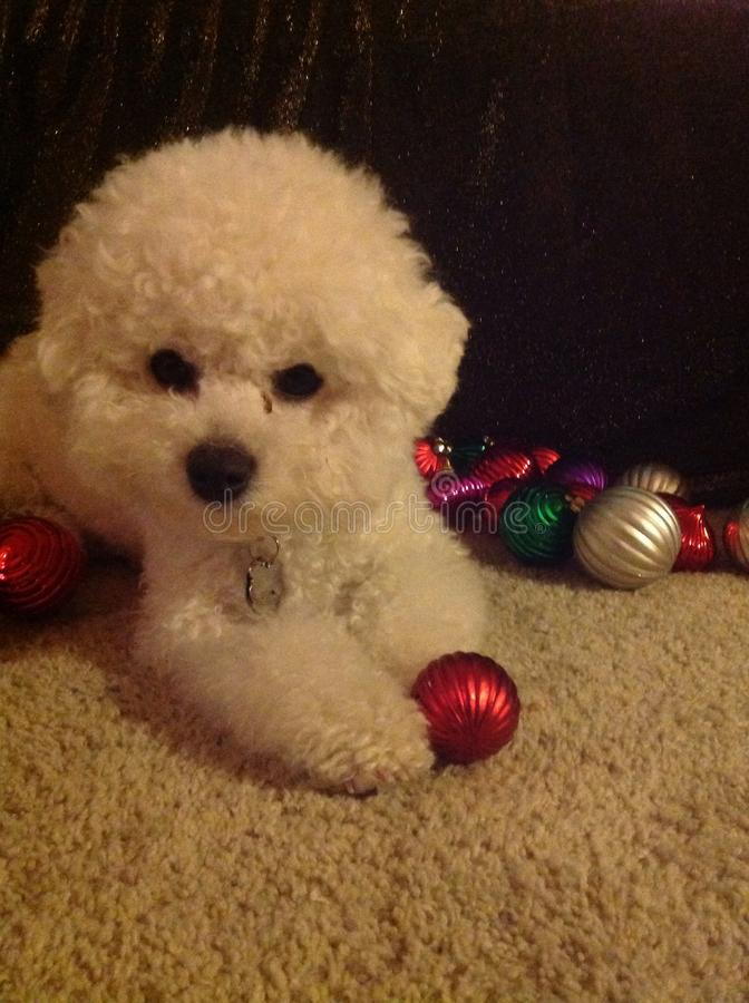 Christmas time for puppy stock photography