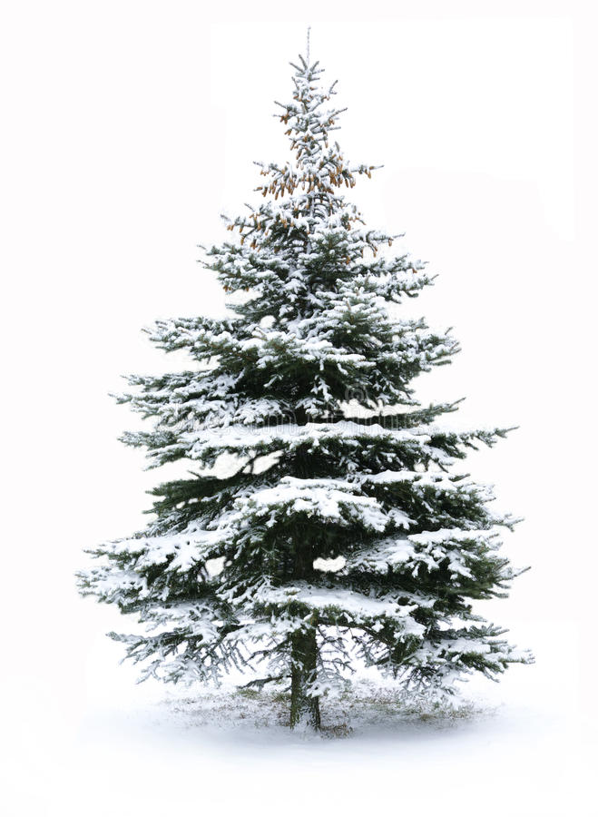 Free Christmas Tree Royalty Free Stock Photo - 11948215