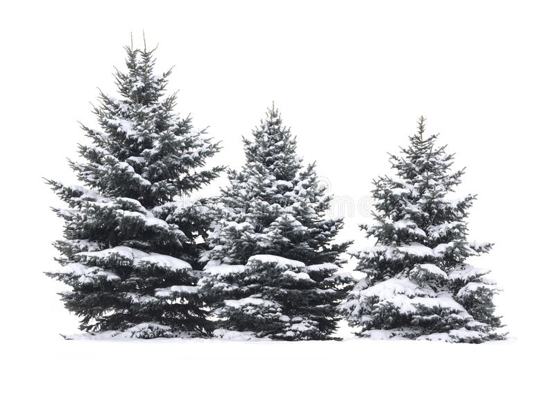 Download Christmas tree stock photo. Image of background, shape - 22262318