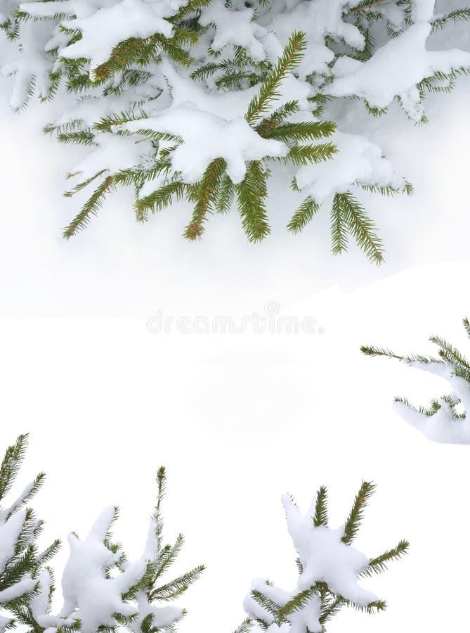 Download Christmas tree stock photo. Image of gift, christmas - 22262410