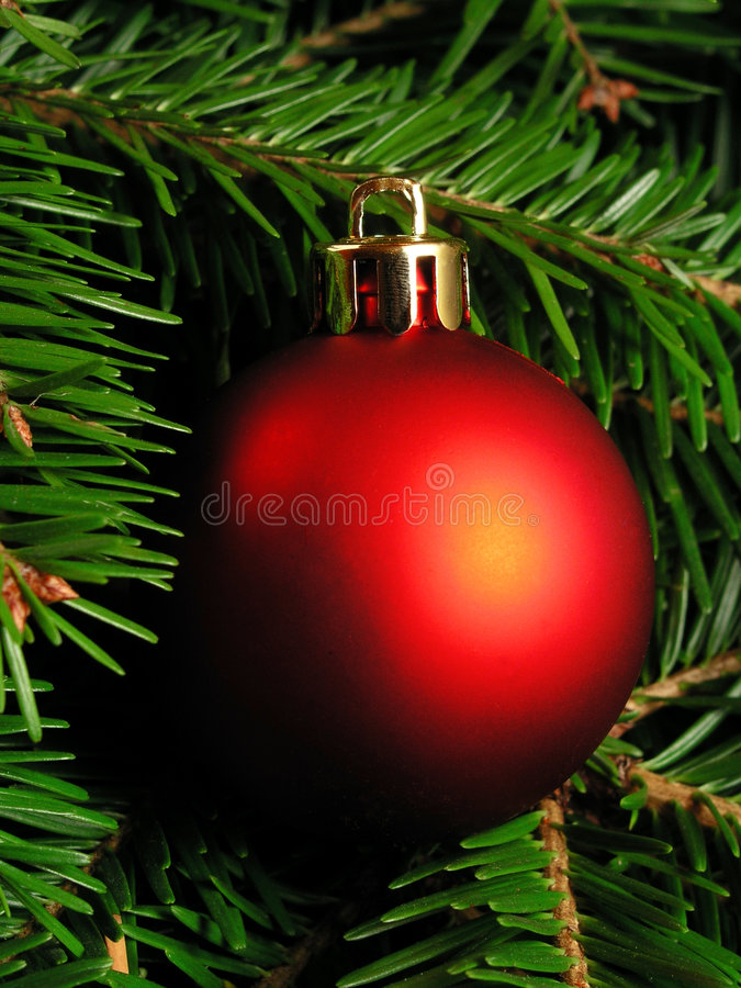 Free Christmas Tree Stock Photo - 251260