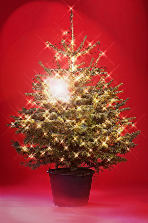 Free Christmas Tree Stock Images - 380514