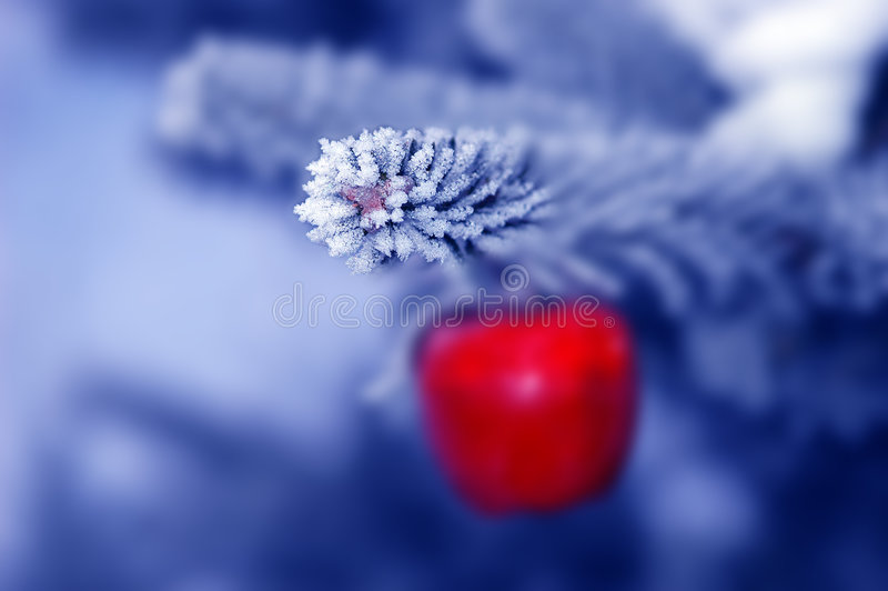 Download Christmas tree stock image. Image of festive, close, coniferous - 458883