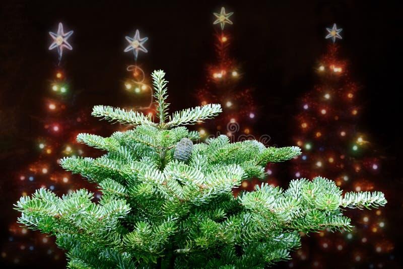 Download Christmas tree stock image. Image of illumination, dream - 6082129