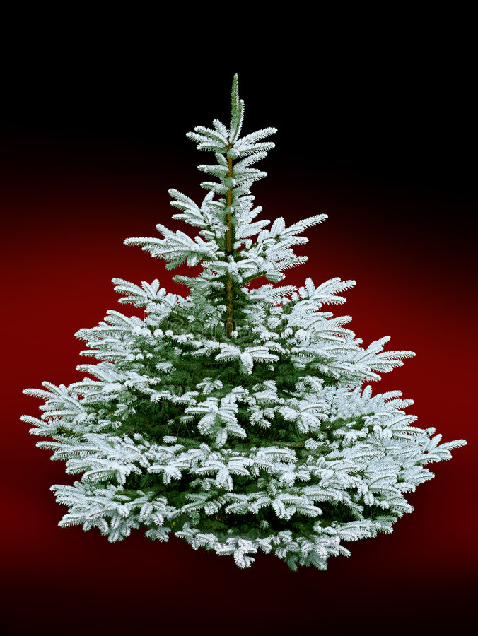 Download Christmas tree stock photo. Image of frost, dream, holidays - 6136860