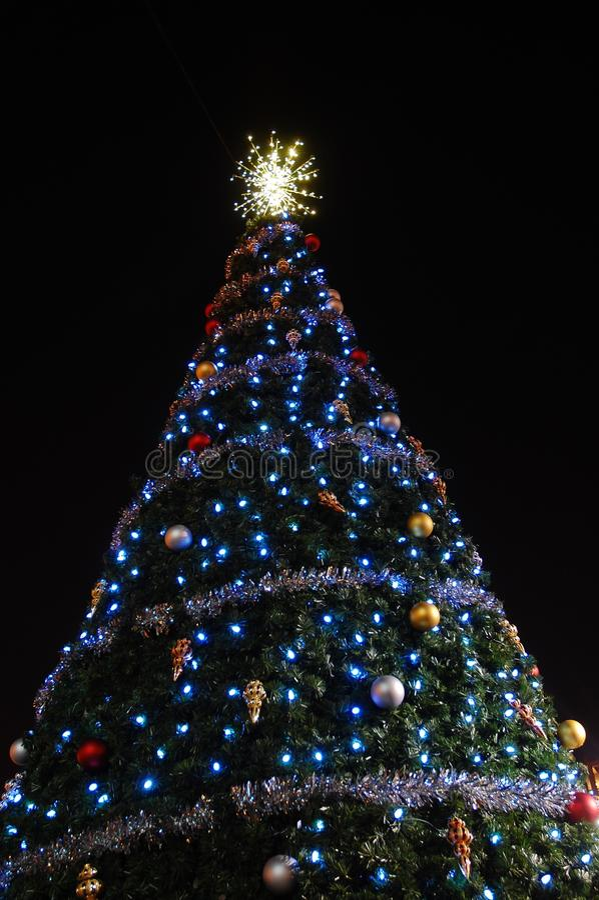 Free Christmas Tree At Night Royalty Free Stock Photo - 12133835