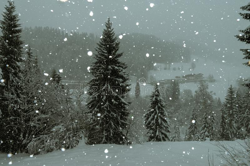 Christmas tree in the austrian alps, covered with snow. Behind some falling snowflakes stock images