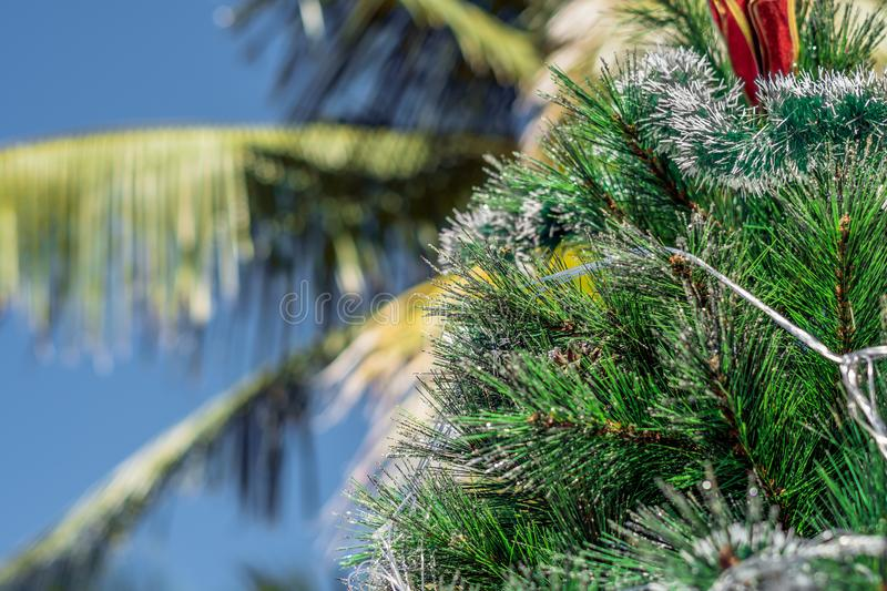 Christmas tree on a background of a palm tree. Christmas in the tropics concept.  royalty free stock image