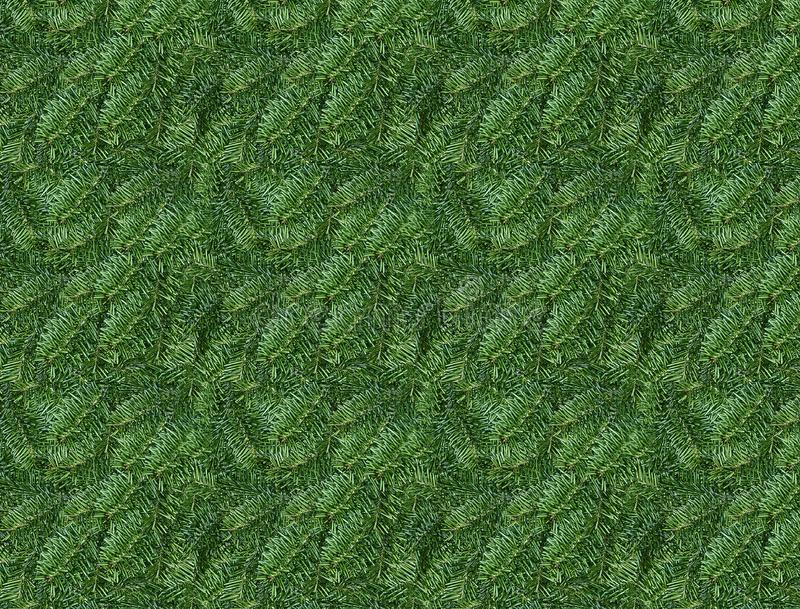 Pine leaves background. Natural pine tips background royalty free stock images