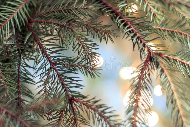 Christmas tree on blurred background. Happy new year and Merry Christmas background. Christmas tree on blurred background stock photography
