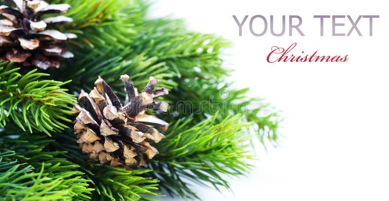 Christmas Tree Border. Evergreen Christmas Tree Border over White stock photos