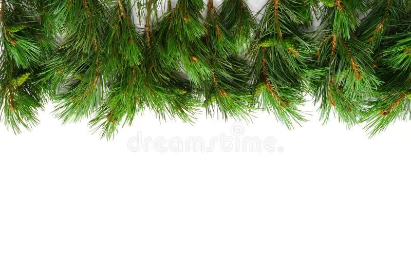 Christmas Tree Border. Mock up with Christmas Tree. Christmas or New Year Border. Winter flat lay stock photography