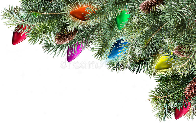 Christmas tree branch royalty free stock photography