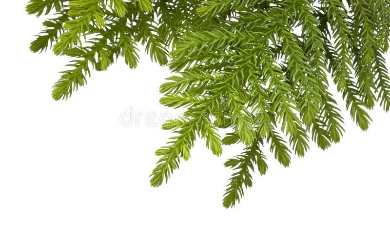 Download Christmas Tree Branch Background Stock Photo - Image: 25044708